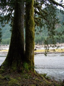 Lake Cushman Riverbed - shore